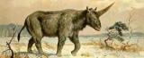 У Казахстані знайдений череп єдинорога