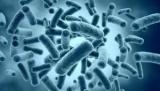 У бактерій знайшли квантова заплутаність