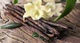 Вчені виявили найстарішу ваніль